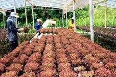 Granja vegetal hidropónica Imagen de archivo libre de regalías