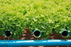 Granja vegetal hidropónica Fotos de archivo