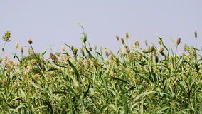 Granja verde Imagenes de archivo