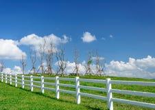 Granja verde de los pastos Paisaje del verano del país Fotografía de archivo