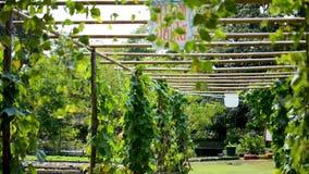 Granja verde del jardín con el vídeo natural de Hd de la planta Ambiente fresco metrajes