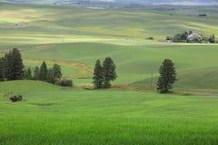 Granja verde enorme Imagen de archivo libre de regalías