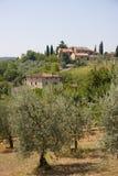 Granja verde oliva en Toscana, Italia Imágenes de archivo libres de regalías