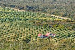 Granja verde oliva - Grampians Fotografía de archivo libre de regalías