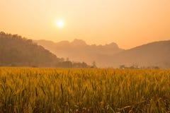 Granja y el sol foto de archivo