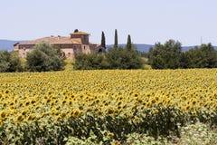 Granja y girasoles de Toscana imágenes de archivo libres de regalías
