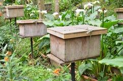 Granjas de la abeja situadas en Cameron Highlands Foto de archivo libre de regalías