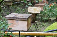 Granjas de la abeja situadas en Cameron Highlands Imagen de archivo libre de regalías