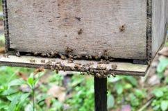 Granjas de la abeja situadas en Cameron Highlands Foto de archivo