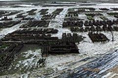 Granjas de la ostra en Francia foto de archivo libre de regalías