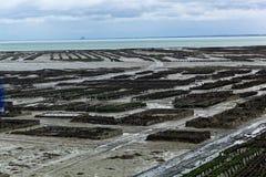 Granjas de la ostra en Francia fotos de archivo