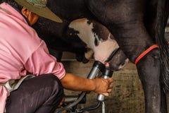 Granjas de los ganados lecheros Imagen de archivo libre de regalías