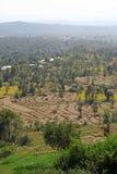Granjas del paso de progresión y campos de la terraza de Kangra la India Fotografía de archivo libre de regalías