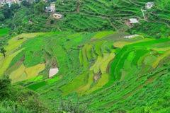 Granjas del paso en montañas Himalayan en Uttarakhand, la India Foto de archivo libre de regalías