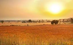 granjas del trigo foto de archivo