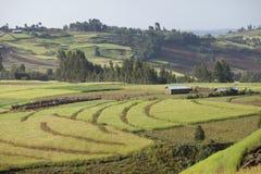Granjas en montañas etíopes imagen de archivo
