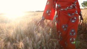 Granjero africano de la mujer en ropa tradicional que camina a través de un campo de cosechas en la puesta del sol o la salida de metrajes