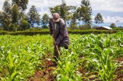 Granjero africano Weeding Imágenes de archivo libres de regalías