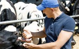 Granjero alegre rodeado por las vacas en granja imagenes de archivo