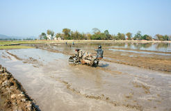 Granjero asiático, campo vietnamita del arroz, arado del tractor Imagenes de archivo