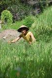 Granjero asiático en el campo del arroz Fotografía de archivo