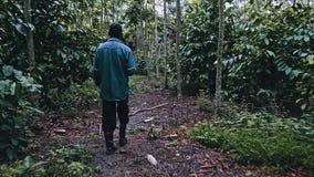 granjero boliviano local que da une vuelta en su plantación de café robusta en el borde de la selva tropical imagen de archivo