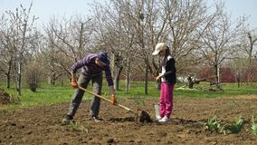 Granjero caucásico y su hija que plantan las patatas en granja en primavera temprana almacen de metraje de vídeo