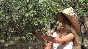 Granjero Child Playing, escogiendo la aceituna en huerta, muchacha que estudia las frutas por el árbol 4K