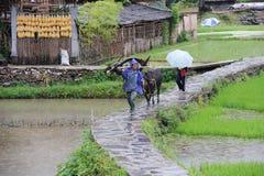 Granjero chino de la nacionalidad de Miao en la lluvia Fotografía de archivo libre de regalías