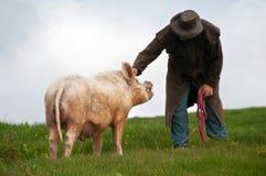 Granjero con el cerdo del verraco Imágenes de archivo libres de regalías