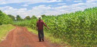 Granjero con el sombrero en el campo de la plantación del maíz Fotos de archivo