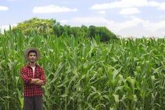Granjero con el sombrero en el campo de la plantación del maíz Imágenes de archivo libres de regalías