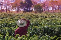 Granjero con el sombrero que mira el campo de la plantación de café Imagen de archivo