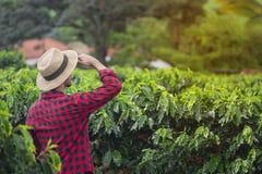 Granjero con el sombrero que mira el campo de la plantación de café Foto de archivo libre de regalías