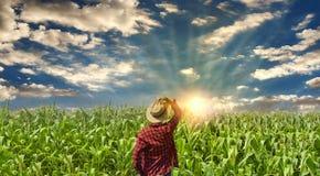 Granjero con el sombrero que mira el campo de la plantación del maíz Fotos de archivo libres de regalías