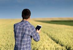 Granjero con la tableta en campo de trigo verde Imagen de archivo libre de regalías