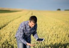 Granjero con la tableta en campo de trigo verde Fotos de archivo libres de regalías