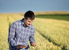 Granjero con la tableta en campo de trigo verde Fotografía de archivo