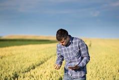 Granjero con la tableta en campo de trigo verde Fotos de archivo