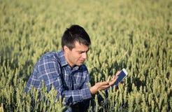 Granjero con la tableta en campo de trigo verde Imagen de archivo