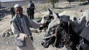 Granjero con la vaca Imagenes de archivo