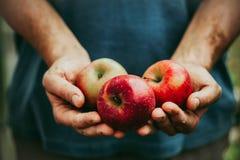 Granjero con las manzanas Fotografía de archivo libre de regalías
