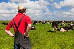 Granjero con las vacas del ganado Foto de archivo libre de regalías