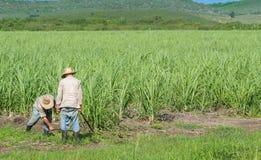 Granjero cubano del campo en el campo de la caña de azúcar durante la cosecha en Santa Clara Cuba - el reportaje de Serie Cuba Foto de archivo