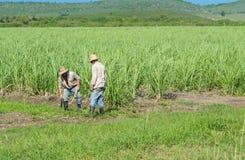 Granjero cubano del campo en el campo de la caña de azúcar durante la cosecha en Santa Clara Cuba - el reportaje de Serie Cuba Fotos de archivo libres de regalías