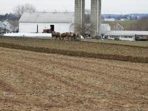 Granjero de Amish con un equipo de mulas imagenes de archivo