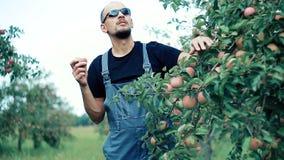 Granjero de Apple que come Apple en el manzanar metrajes