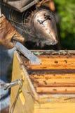 Granjero de la abeja con el fumador en una colmena Fotografía de archivo libre de regalías