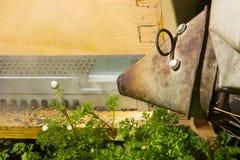Granjero de la abeja con el fumador en una colmena Foto de archivo libre de regalías