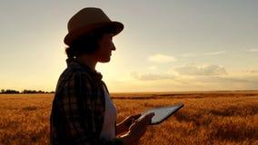 Granjero de la chica joven en camisa de tela escocesa en campo de trigo en fondo de la puesta del sol La muchacha utiliza una tab foto de archivo